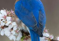 Tesla Blue Bird New 292 Best B L U E B I R D Of Happiness Images